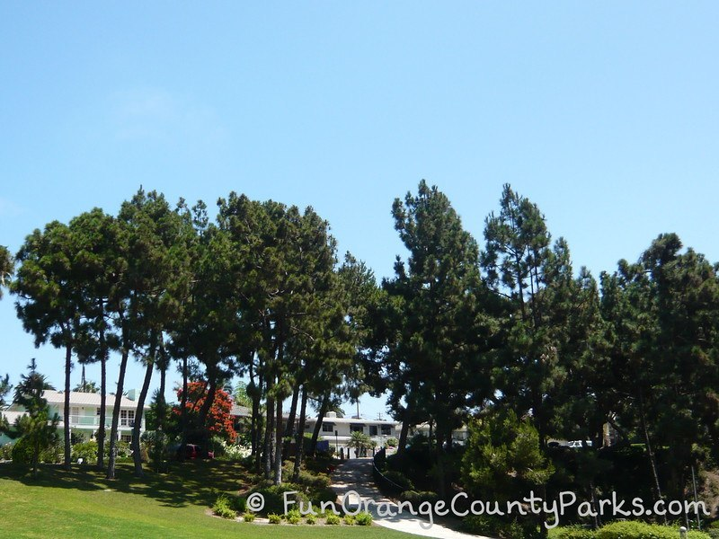 grove of pine trees at Pines Park