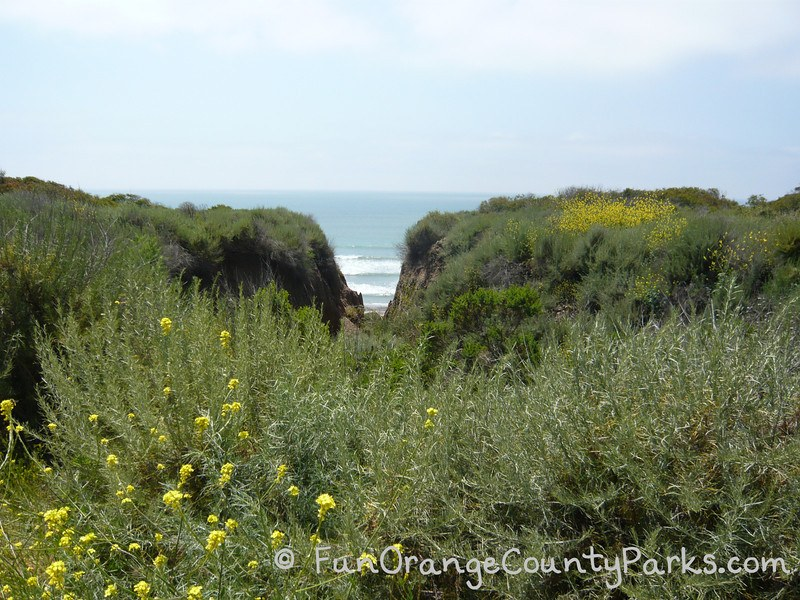 View of ocean and wildflowers from San Onofre State Beach Trail 6