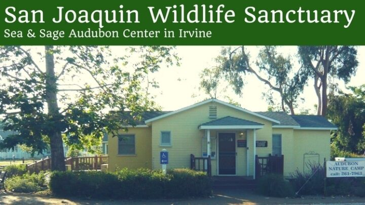 San Joaquin Wildlife Sanctuary in Irvine: Wildlife Spotting in the Wetlands