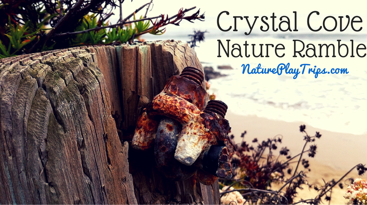 Crystal Cove State Park Nature Ramble