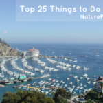 Top 25 Things to Do in Avalon Catalina