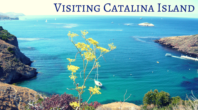 Tours On Catalina Island