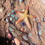 El Toro Park in Lake Forest: Tidepools Without the Tide