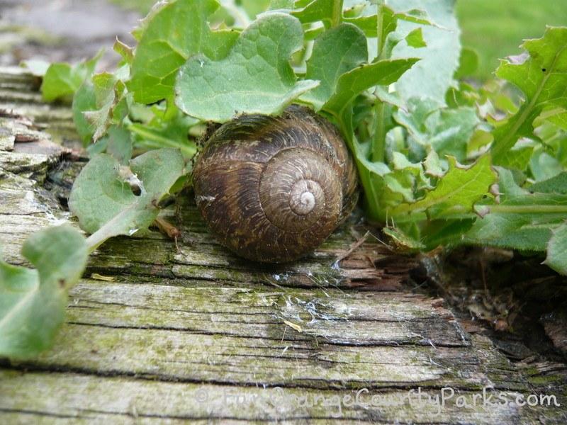 rainy day play ideas - snail