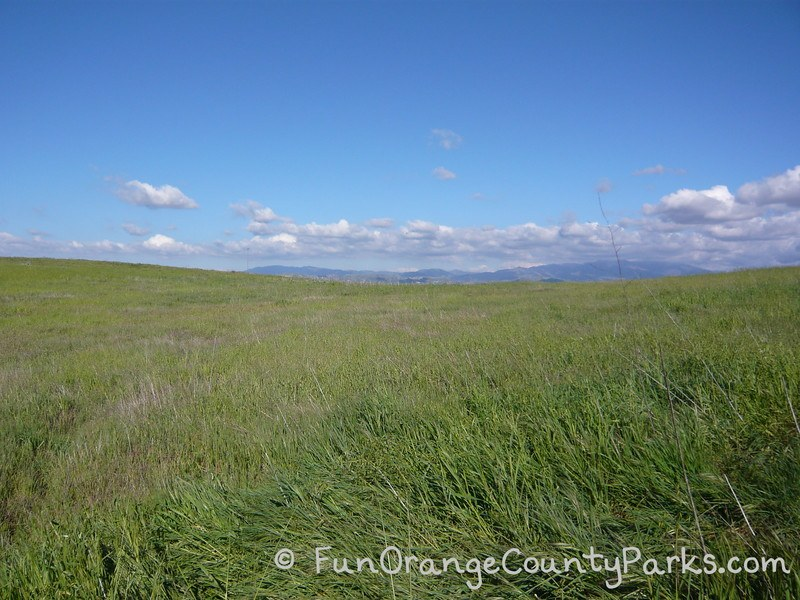 grasses in the foreground with mountains and blue sky in the distance