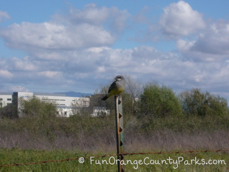 bird on post in foreground with field and blue sky in background
