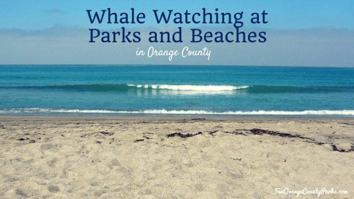 Top 12 Whale Watching Parks and Beaches for Orange County