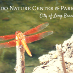 El Dorado Nature Center and El Dorado East Regional Park in Long Beach