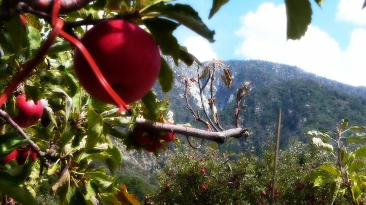 Riley's at Los Rios Rancho Apple Farm Trip: Celebrating Fall with Family
