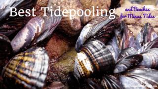 tidepooling minus tides mollusks