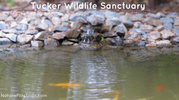 Tucker Wildlife Sanctuary Natural Science Center and Birdwatching
