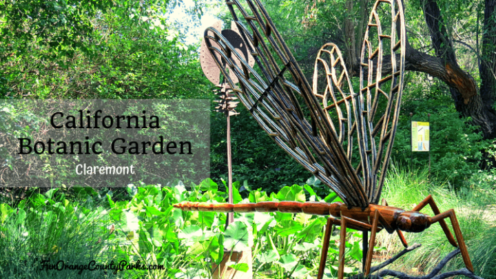 California Botanic Garden in Claremont: Wonderland of Spring Flowers
