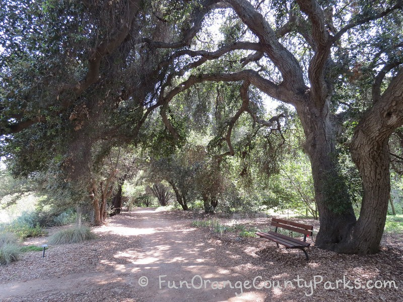 an oak covered dirt trail at California Botanic Garden with a bench