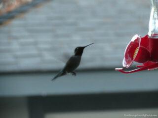 Make Hummingbird Food
