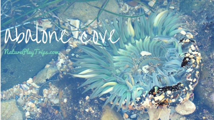 Road Trip: Abalone Cove Shoreline Park in Rancho Palos Verdes