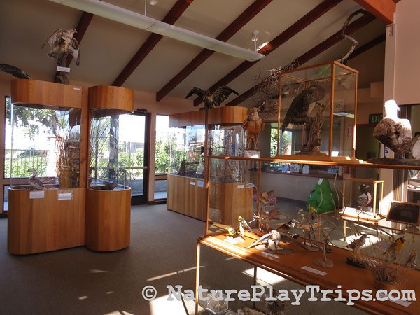 Buena Vista Nature Center Inside