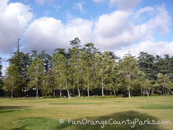 cedar grove park tustin tree area