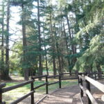 Cedar Grove Park in Tustin: Under the Troll Bridge and Through the Woods