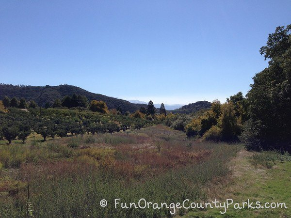 orchard and mountain views at oak glen