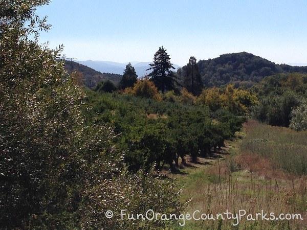 oak glen orchard views