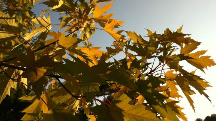 New Fall Fun: Nature Play Pumpkin Day and Bug Bog Scavenger Haunt Adventure
