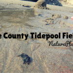 tidepool field trips in orange county