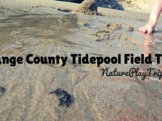 tidepool field trips in orange county