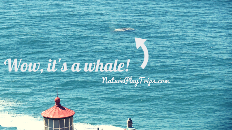 Gray Whale Photos for Kids