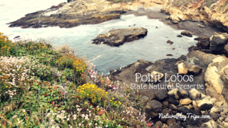 Point Lobos State Natural Preserve