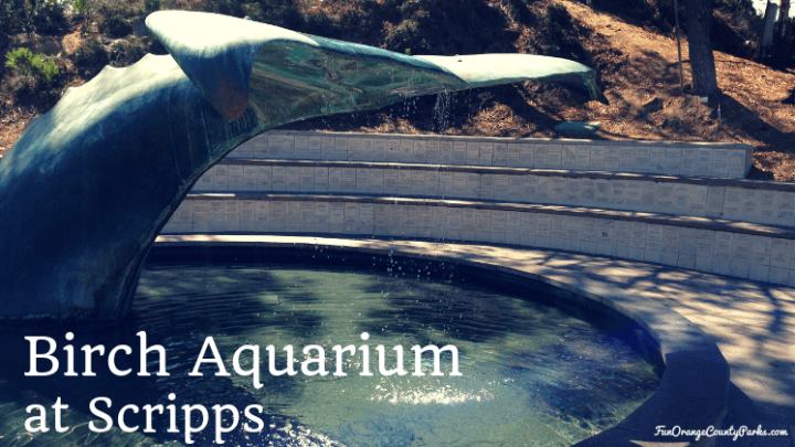 Birch Aquarium at Scripps for Seahorses and Leopard Sharks