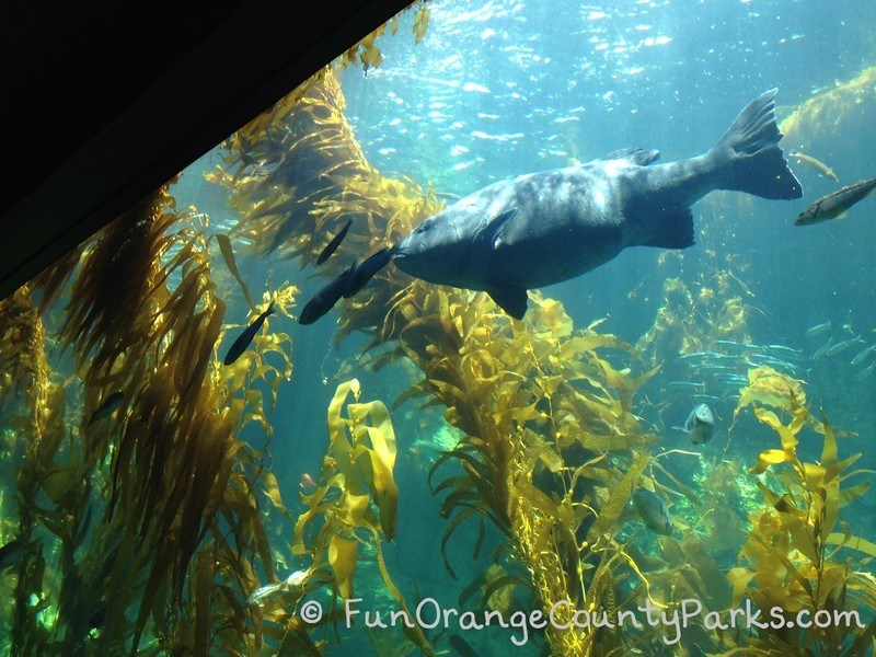 birch aquarium la jolla sea bass