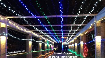 illuminocean-featured