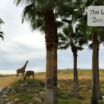 The Living Desert Zoo and Gardens Displays Sonoran Desert Life