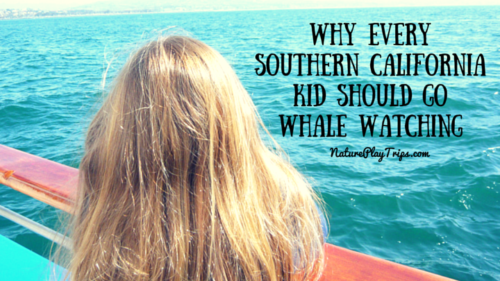 Why Every Southern California Kid Should Go Whale Watching