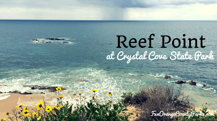 reef point crystal cove state park - view of ocean from bluff