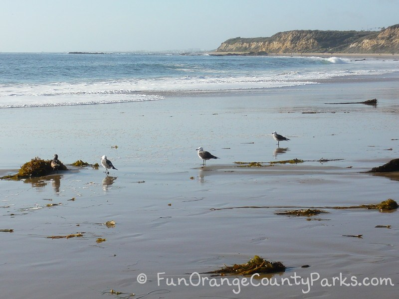 reef point crystal cove state park - seagulls
