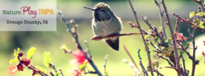 npt facebook hummingbird-2