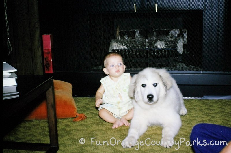 places for babies to play - puppy with baby