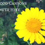 aliso wood canyons wildflower hike aliso viejo