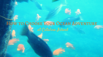 How to Choose Your Ocean Adventure at Catalina Island