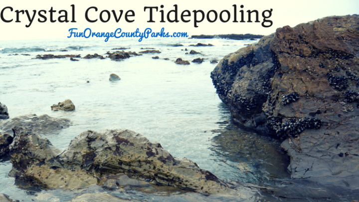 Crystal Cove State Park: Tidepooling at a Natural Playground