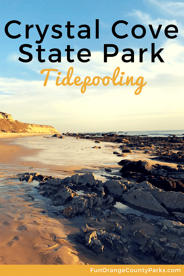 Crystal cove state park tidepooling at a natural playground its always nice to share nvjuhfo Image collections