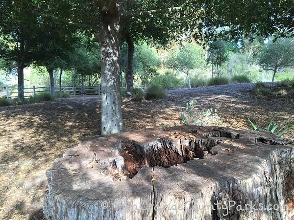 tree stump in a shaded oak grove