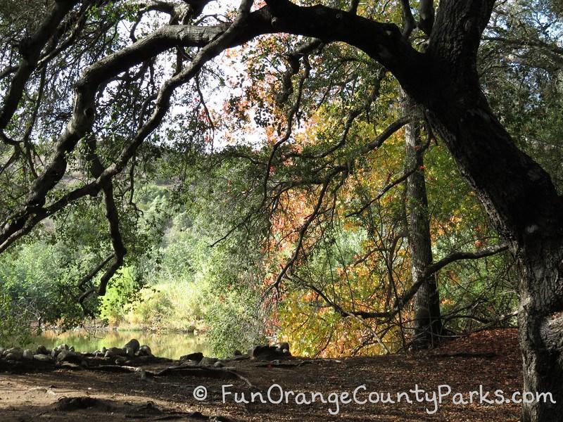 Fall In Descanso Gardens