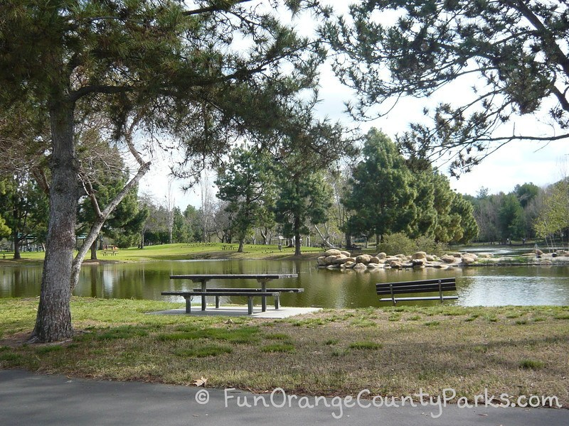 A picnic table and bench along the lake at Yorba Regional Park. Pine trees and grassy areas dot the landscape.