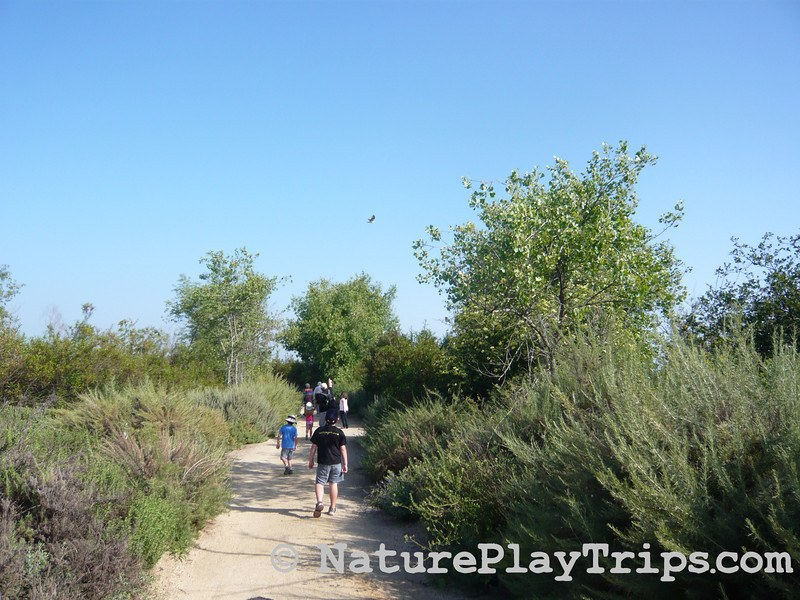 Families hiking at San Joaquin Wildlife Sanctuary on a dirt trail surrounded by green trees and bushes with an osprey flying above.