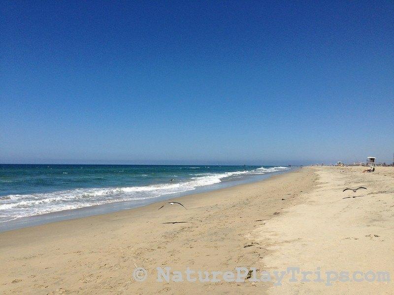 huntington beach waves at the beach with seagulls flying along sand