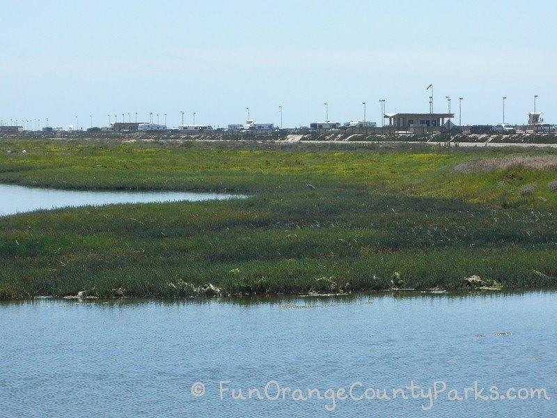 great blue heron in the wetlands