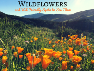 wildflowers and kid-friendly spots to see them