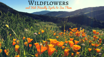 2017 Wildflowers and Kid-Friendly Spots to See Them